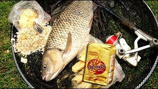 Лучшая овсяная мука для рыбалки овсянка геркулес в прикормку своими руками все секреты