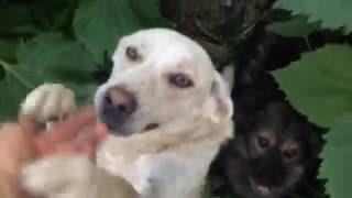 Приют для собак в Ольшанце (Елец)