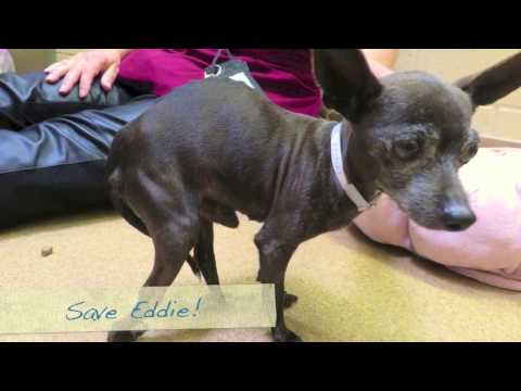 Please Help Save A Shelter Little Dog That Has Had A Hard Life!