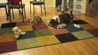 Boxer Playing With Baby Pug