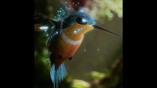 ⭐ Живые обои Hummingbird HD | Скачать бесплатно | На рабочий стол ⭐