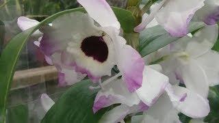 Обзоры из Леруаорхидеиуценки