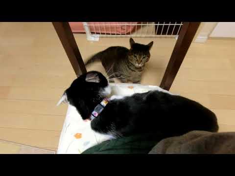 猫の相性の悪い例