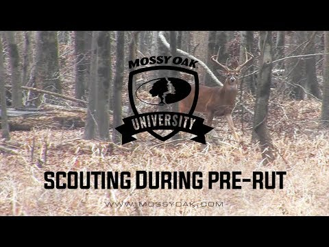 Scouting While Hunting Pre Rut | Whitetail Hunting Tips
