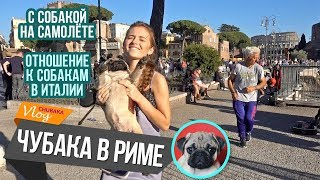 Перелёт с собакой / С собакой в Италии / Чубака император / Chubaka Vlog!