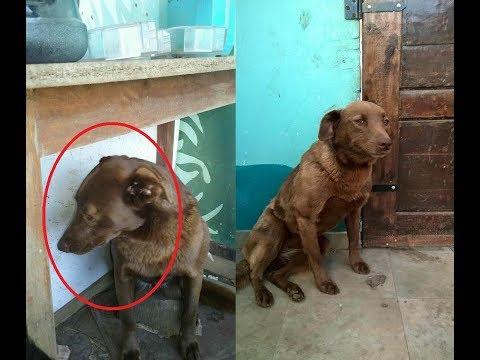 Грустная собака 2 года ждала своего хозяина. И вот эта встреча состоялась! Трогательно до слез.
