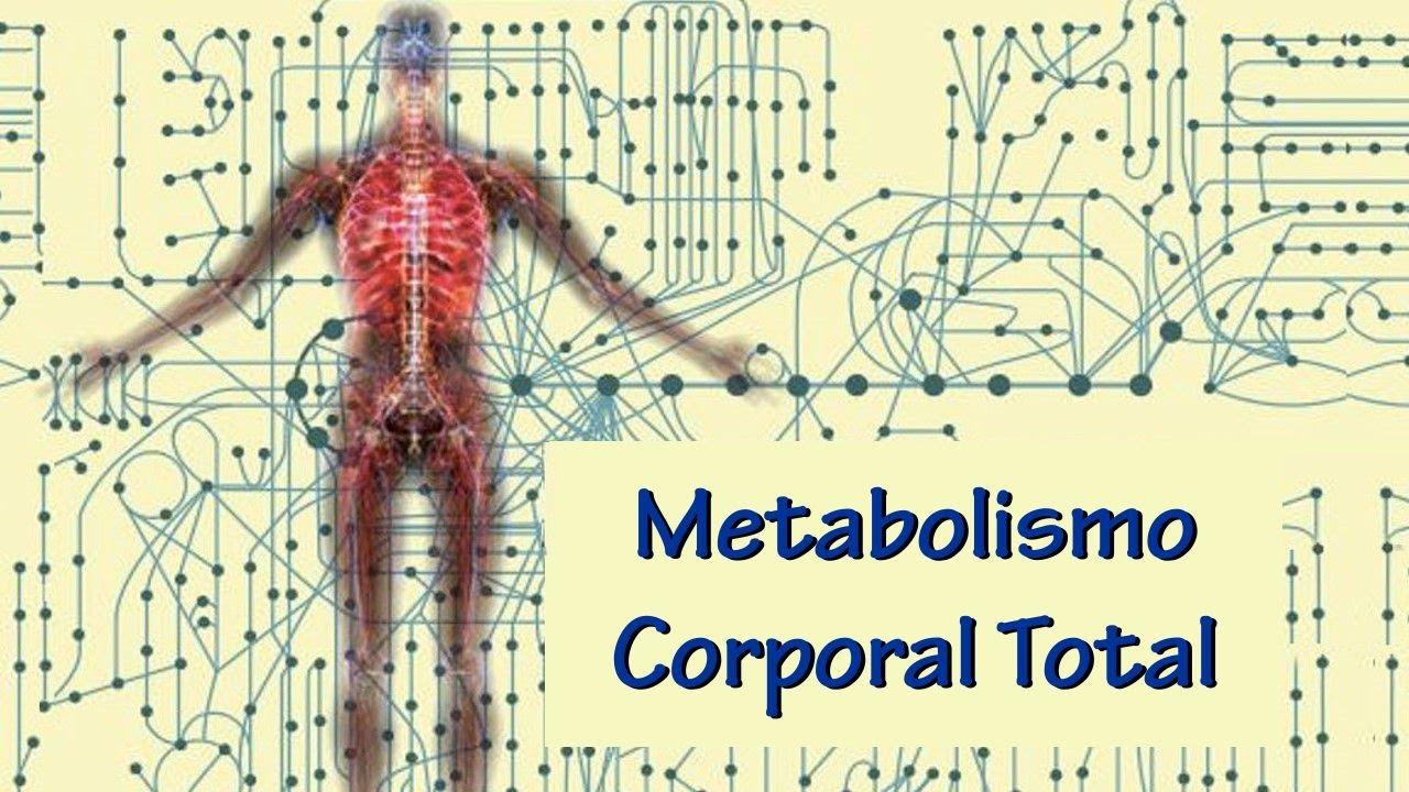 Metabolismo - YouTube