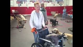 Sit Means Sit Dog Training Group Class Knoxville Tennessee