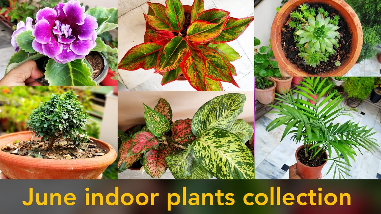 Collection of my indoor plants garden with names, shade ...