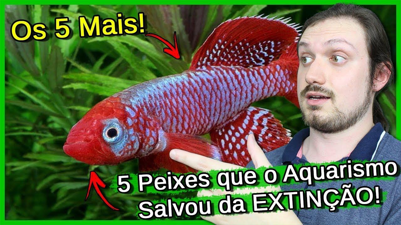 5 Peixes que o Aquarismo salvou da EXTINÇÃO!