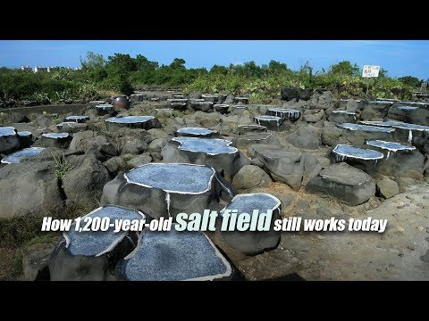 Live: How 1,200-year-old salt field still works today 探访洋浦千年古盐田