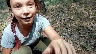 Уехали в лес.... И не доехали....