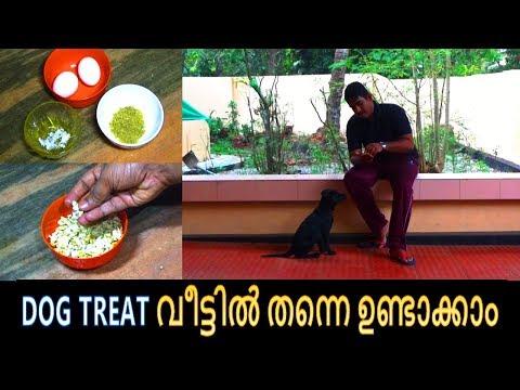 dog training :  'dog treat malayalam' : kerala dog training : വളര്ത്തു നായയെ പരിശീലിപ്പിക്കാം