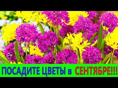 ПОСАДИТЕ ЭТИ ЦВЕТЫ в СЕНТЯБРЕ! Они порадуют цветением в следующем году!