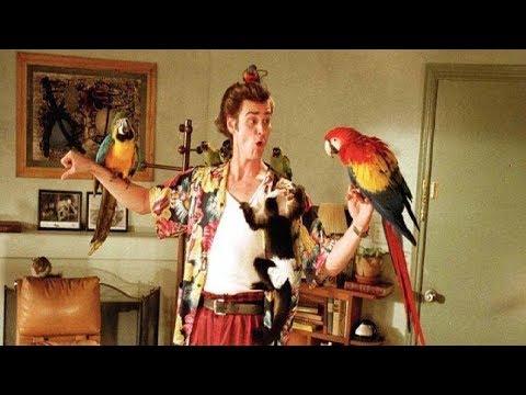 Elvis Presley vai ganhar al com diretor de Magic Mike  Observatório do Cinema