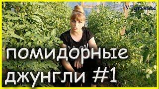 СУПЕР - БОМБЕЗНАЯ подкормка для ТОМАТОВ и профилактика фитофтороза у помидор!!!