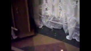 Попугай Ксюша прячется от жениха Кеши