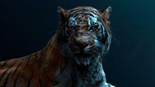 Самые Большие Тигры в Мире. Топ 10