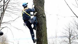 способ подъёма на дерево с использованием коротких петель из основной верёвки и альп снаряжения