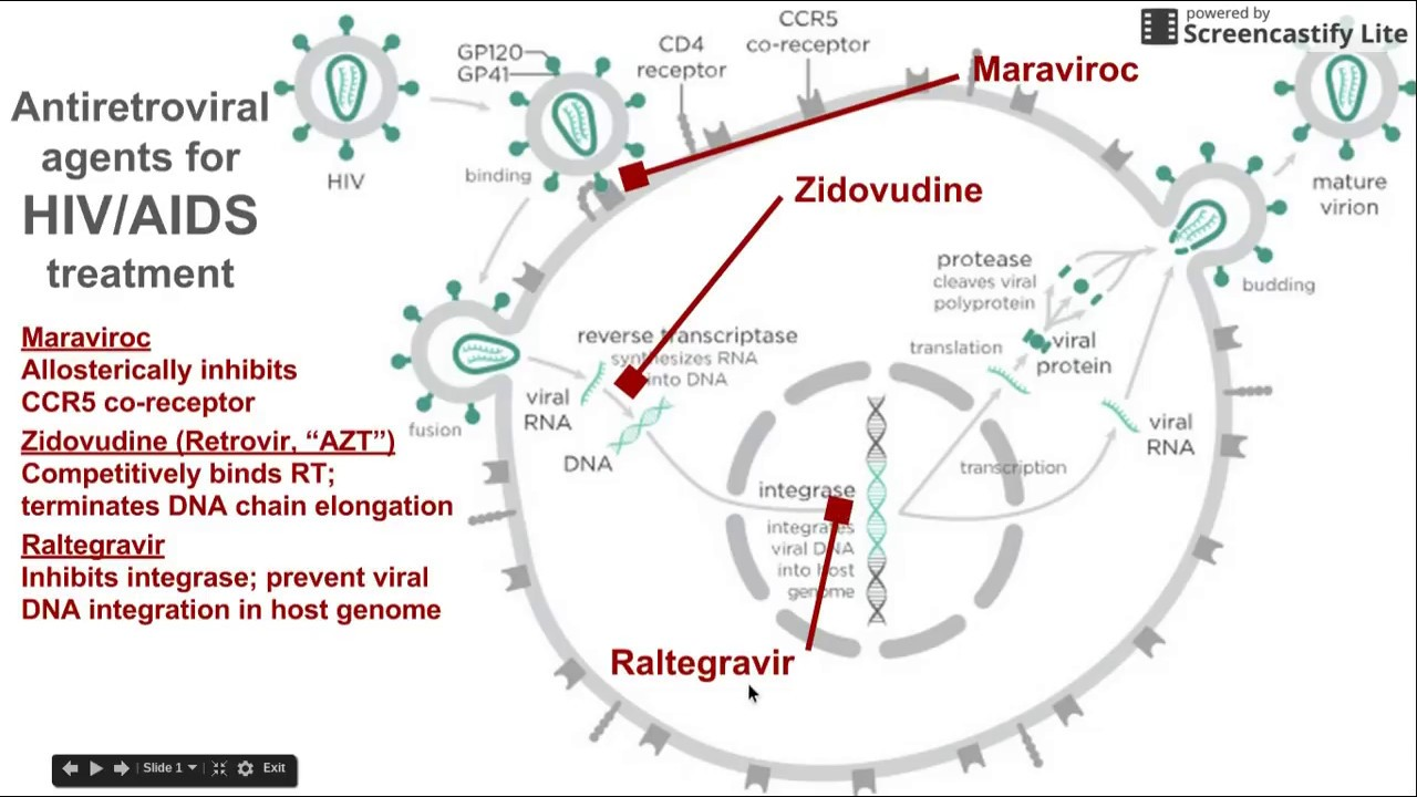 antiretroviral agents for hiv aids treatment [ 1280 x 720 Pixel ]