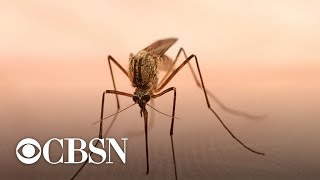 West Nile virus cases spike in U.S.