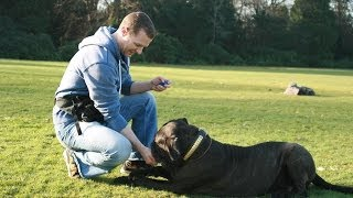 Prong Collars - Glasgow Dog Trainer - Equipment Part 2