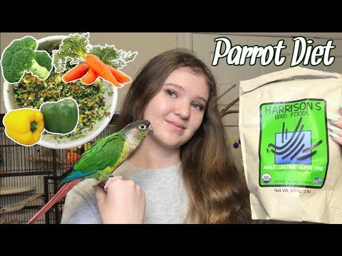WHAT SHOULD YOU FEED YOUR BIRD? | My Parrots' Complete Diet