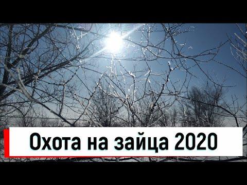 ОХОТА НА ЗАЙЦА И ЛИСУ. ТРОПЛЕНИЕ ПОДРАНКА. ОХОТА 2020