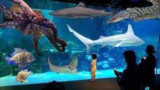 Shark,crocodile,octopus/코엑스 아쿠…