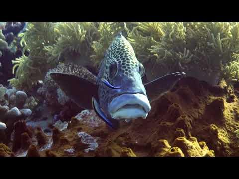 TUBBATAHA REEF Scuba Diving  APRIL  2018 (HD)
