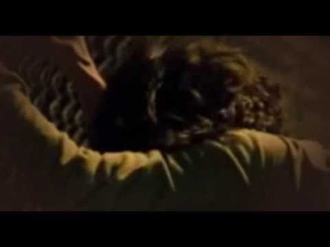 Shelter - Full Movie English