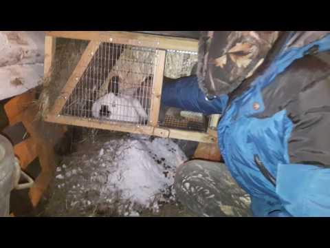 Как правильно сделать клетку для кроликов своими руками в домашних условиях фото 934