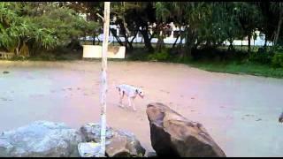 vuclip beruwala dog fucking a girl