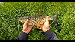 Рыбалка на малой реке Нахлыст голавль лето Summer small river fly fishing chub