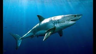 Блиц онлайн -  против Опасной Рыбы