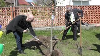 Sadenie stromčekov na ZŠ Strážnická