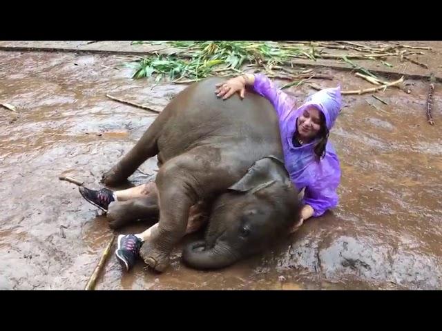 El 'ataque' de este bebé elefante a una mujer que visitaba su hábitat es lo más tierno del día