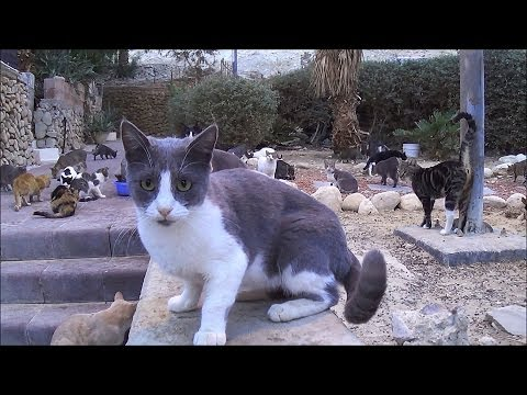 Cat Land - Incredible!