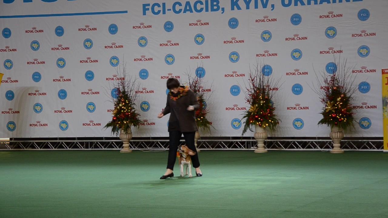 Макеева Татьяна и бигль Умка