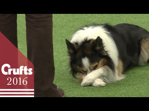 Heelwork to Music - Freestyle International Competition Part 2 | Crufts 2016