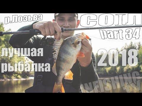 Лучшая рыбалка 2018. Щука и крупный окунь на джиг в низовьях Лозьвы