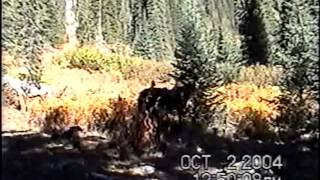 Elk Hunting-Selway Bitterroot Wilderness.wmv