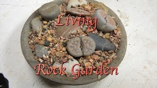 Making a Lithops Rock Garden