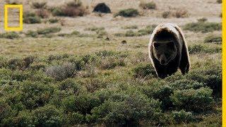 Impactantes Imágenes De Depredadores Y Sus Presas En Estados Unidos National Geographic En Español Youtube