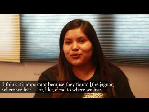 Hiaki High School Students Name a Jaguar in Arizona
