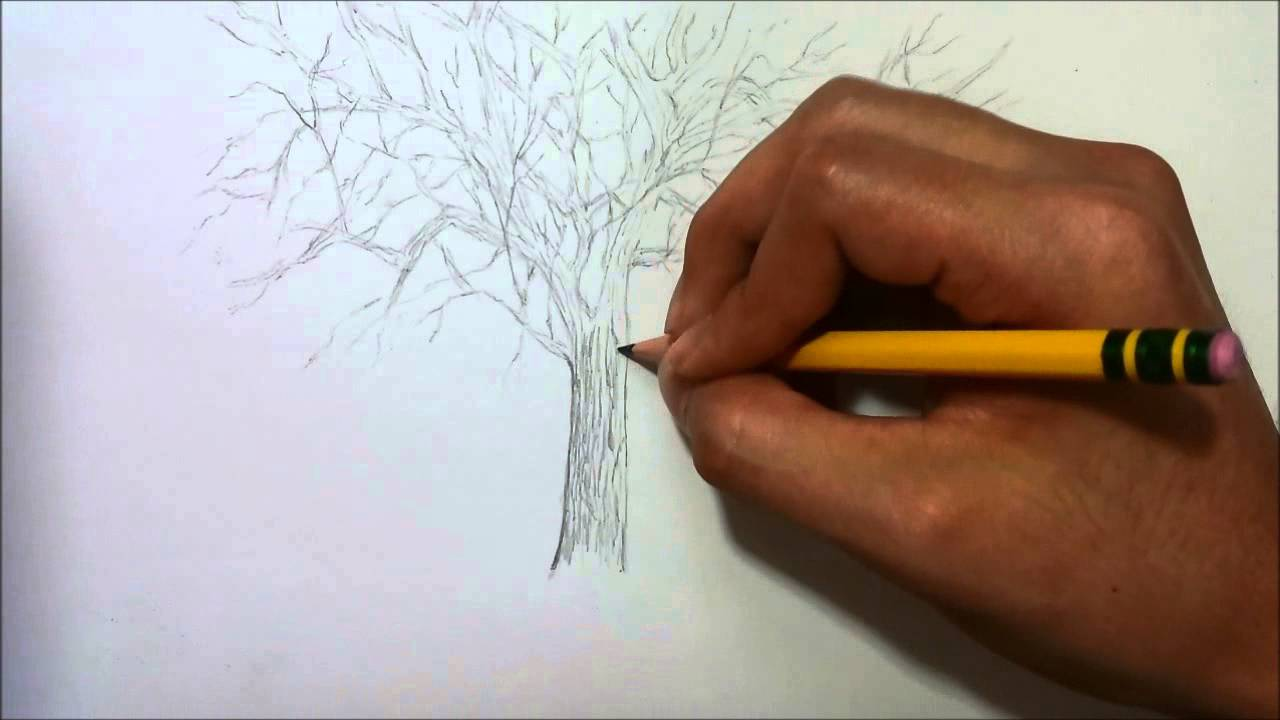 simple drawing tree without leaves youtube