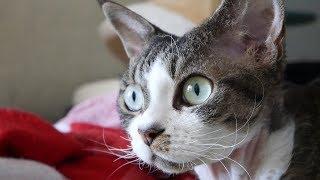 Влог: Смотрят ли коты телевизор