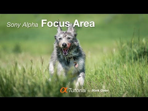 Choosing The Best Focus Area On Your Sony Alpha Camera