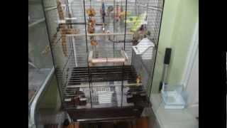 Lovebird cage set up