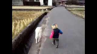 息子、1歳8ヶ月になりました。だんだん自我が強くなってきました。 犬と...